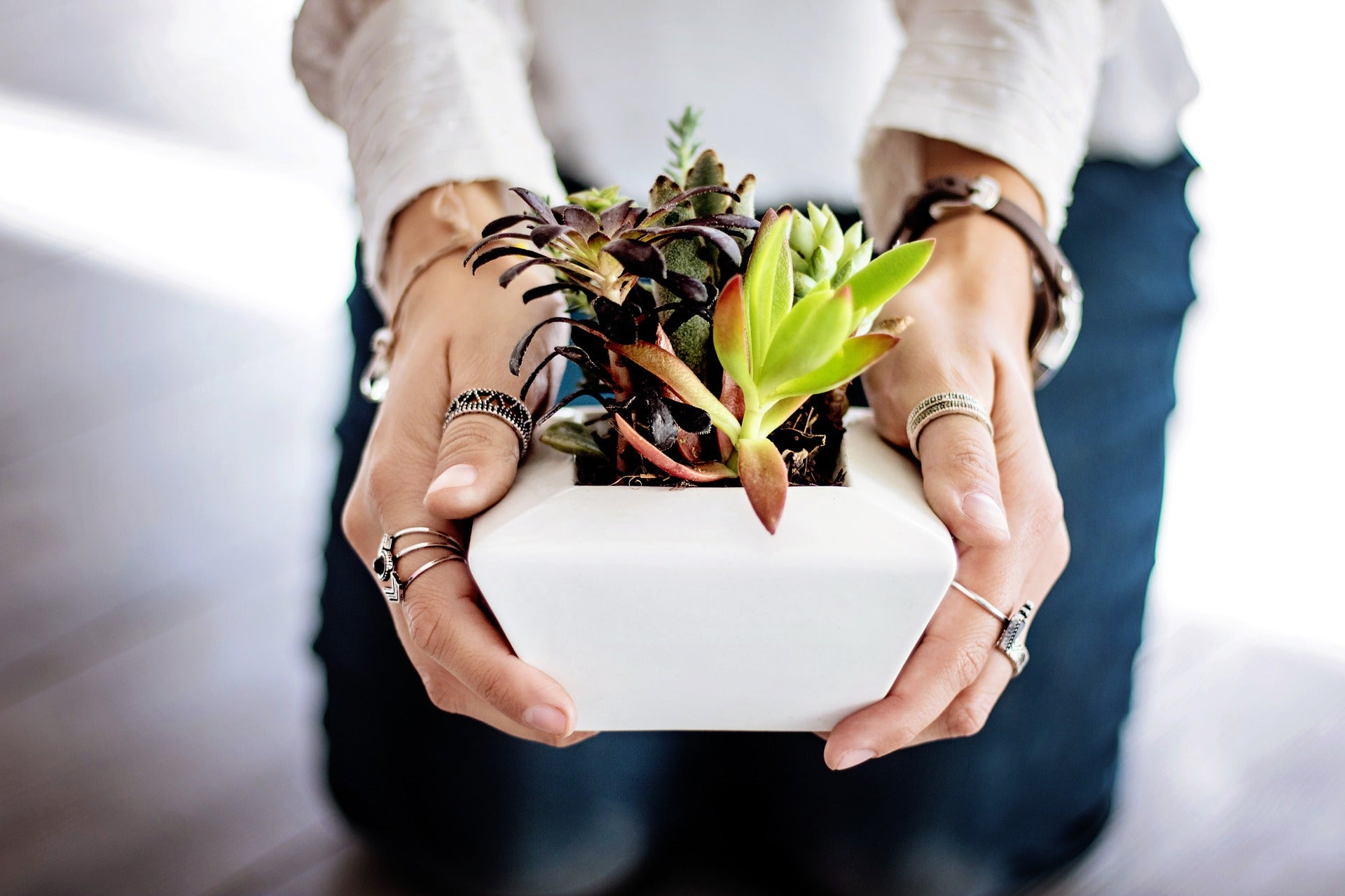 hands holding succulent ceramic planter