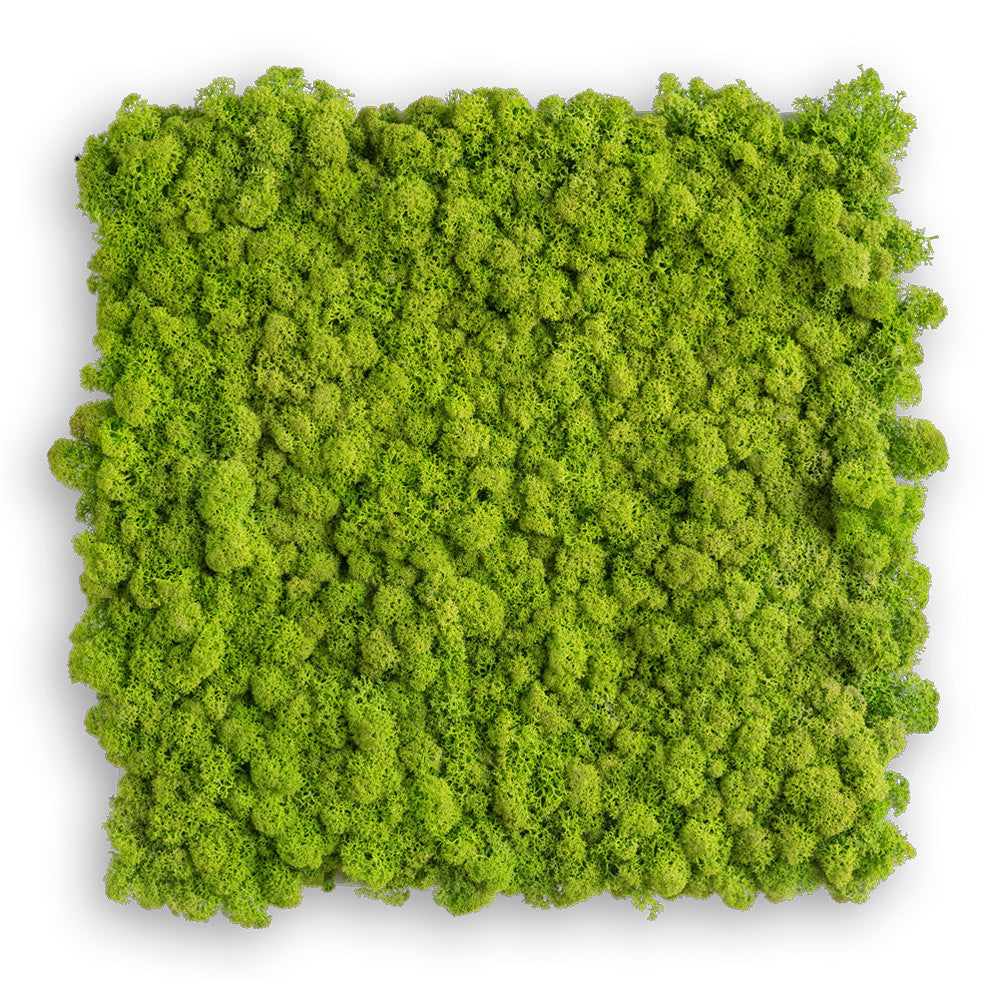 Island Moss Image 35x35 - May Green