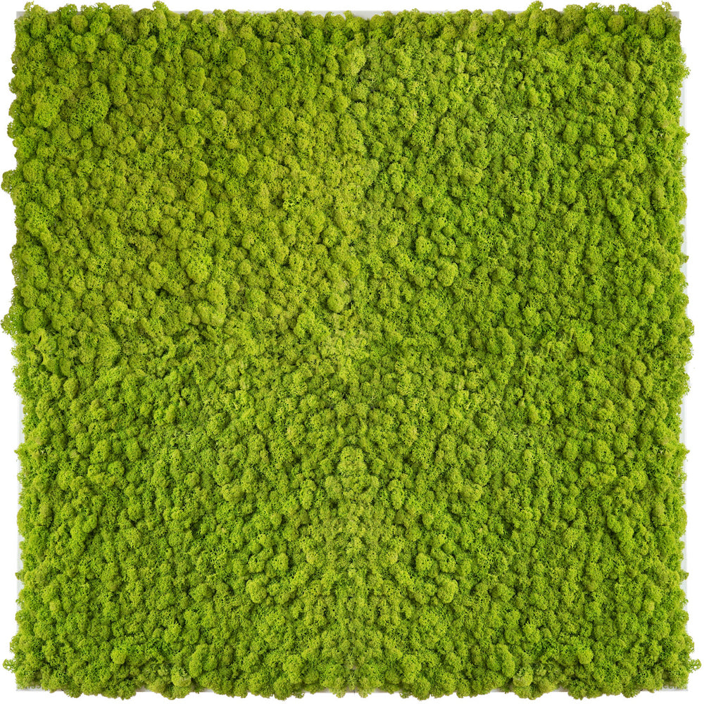 Island Moss Image 80x80 - May Green