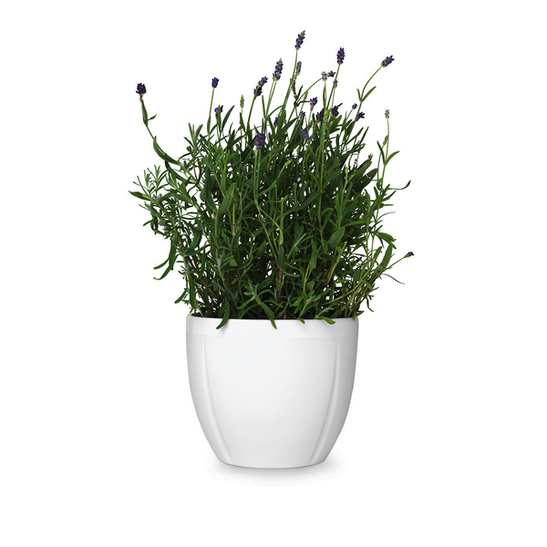 Grand Cru Flower Pot, White, 6.3""