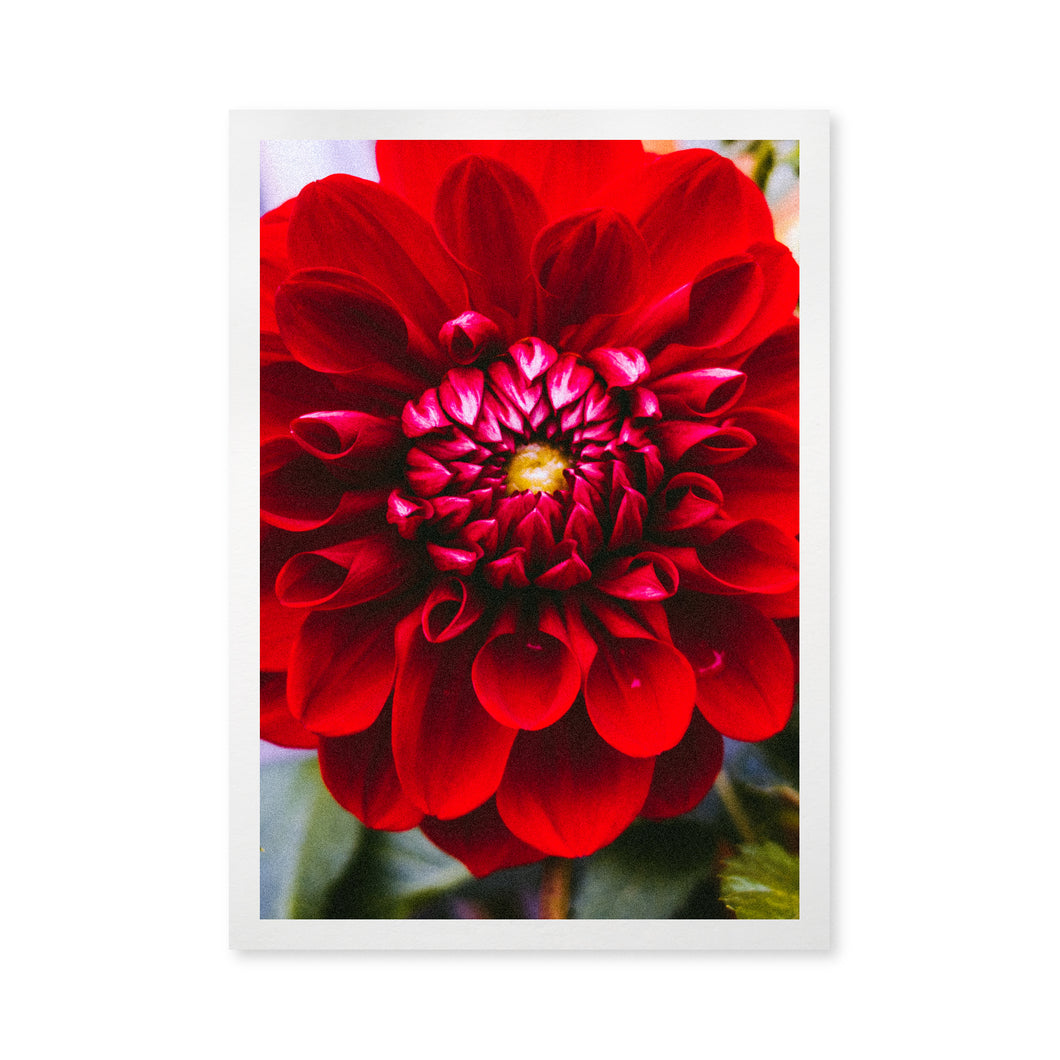 Flower Vibes Card
