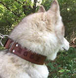 Personalized Brown 1.5-Inch Wide Martingale Dog Collar and Leash Set