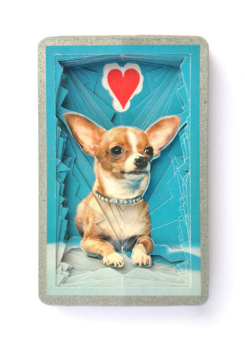 Lonely Heart No.201542 (Chihuahua)