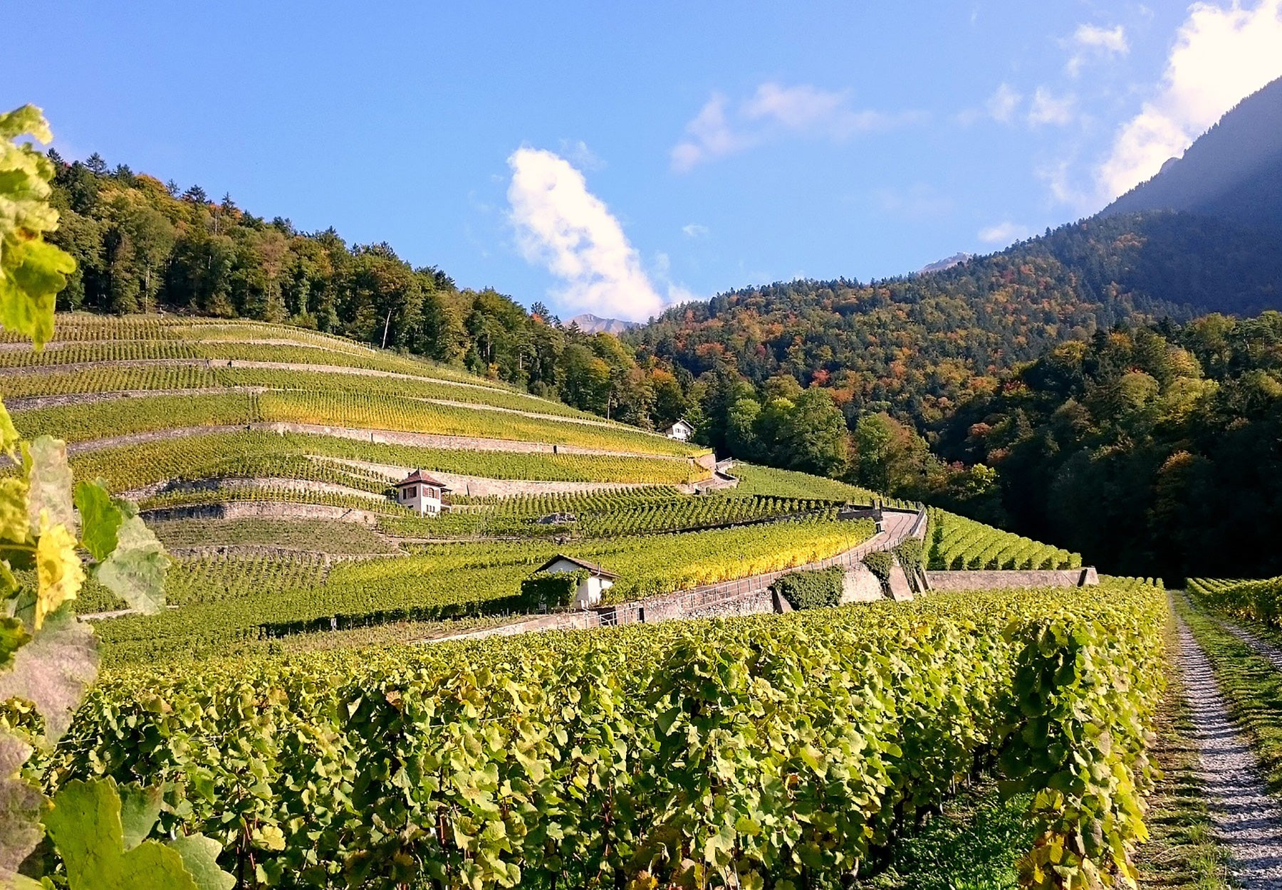 4 Amazing Road Trip Destinations for the wine lover