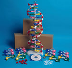 DNA Model Kit - lyonscientific