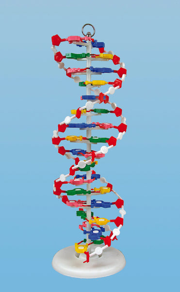 DNA Model - lyonscientific