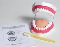 Oral Hygiene Model - lyonscientific