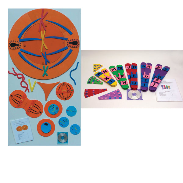 Mitosis and Meiosis Manipulative Bundle - lyonscientific
