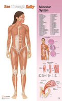 See-Through Sally?????? Human Anatomy Display - lyonscientific