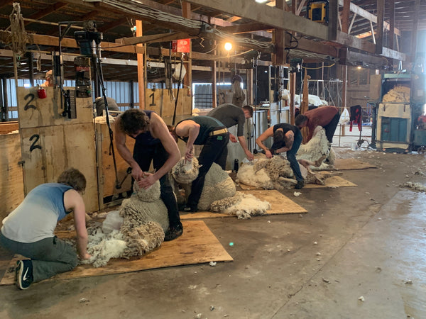 WeatherWool is proud to work with the Jones Ranch of New Mexico and the Debouillet Breed of Sheep the Jones Family has developed on their own land during a century of careful breeding.