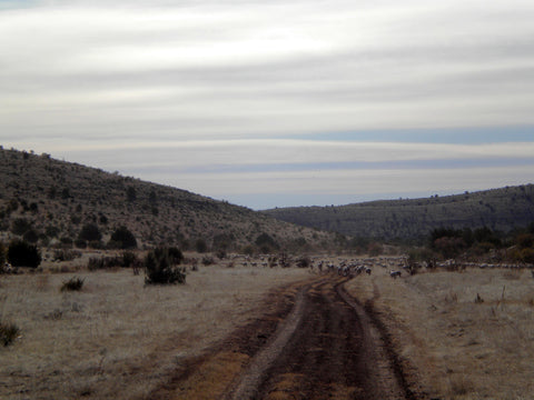 Rangeland at Russell Leonard Ranch, from which WeatherWool has sourced wool