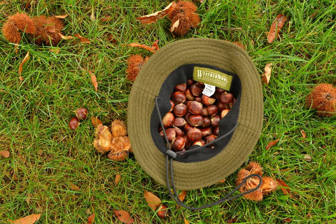 WeatherWool Boonie Hat in Solid Drab Color used as a foraging basket for edible Chestnuts