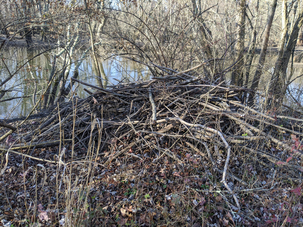 Beaver Lodge on the bank of the Rockaway River at THE SWAMP, where we do a lot of testing and photographing of WeatherWool