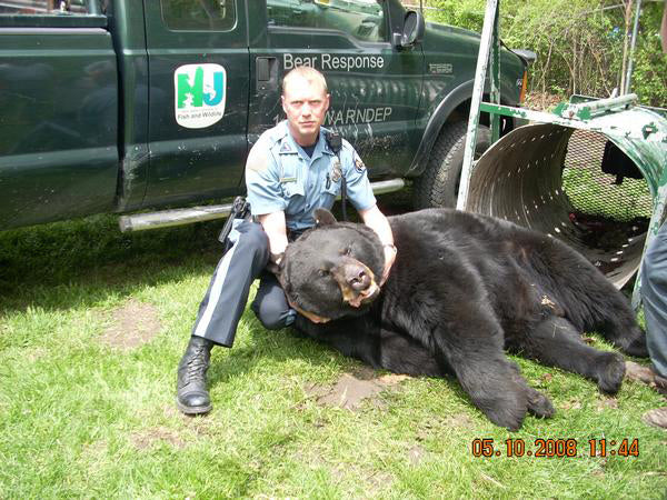 New Jersey Monster Black Bear, 726 pounds in May