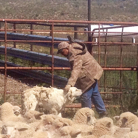 WeatherWool Advisor Mike Corn is a Sheep Rancher and owner of Roswell Wool, America's Largest Wool Storage and Auction House