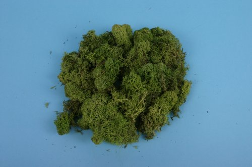 Lichen - Light Green (80g)