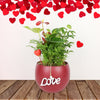 Classic Anthurium & Boston Fern Arrangement