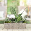 Tropical Green Succulent Garden