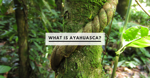 What is Ayahuasca?