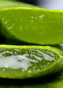 Is Aloe Good For Eczema?