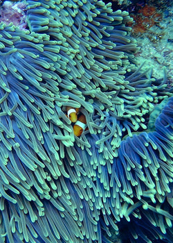 What Sunscreens Are Safe For Coral Reefs?