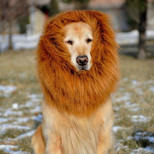 Hilarious Dog Lion Mane