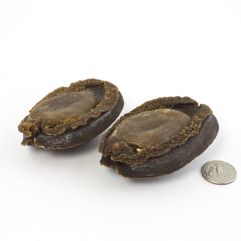Japanese Iwate Rare Dried Abalone #589(16 oz)