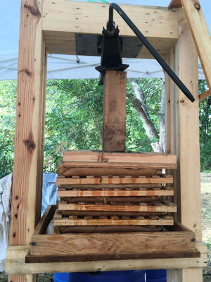 Cider being produced in an old-style wooden apple press