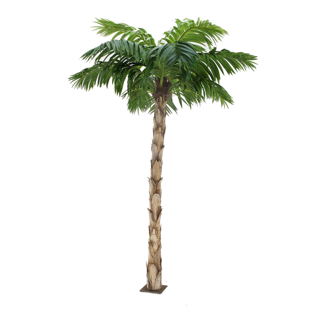 Peruvian Palm Tree 8ft Tall