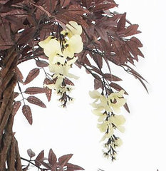 Cream Flowering Burgundy / Deep Red Japanese Fruticosa Tree
