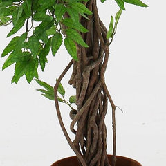 Siam Fruticosa Artificial Trees & Plants, 6ft Conservatory Trees