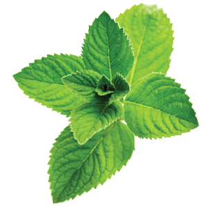 Peppermint-_ingredient.png