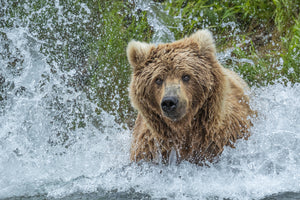 Exclusive Katmai Alaska Workshop with Gavriel Jecan