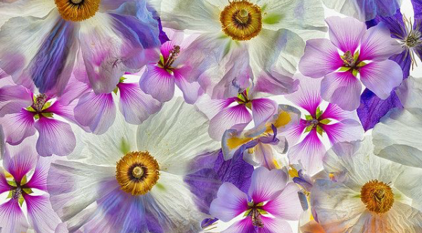 Photographing Flowers for Transparency with Harold Davis