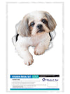 Curious Shih tzu Decals