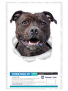 Happy Staffie Decals
