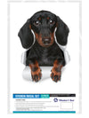 Cute Dachshund Decal..