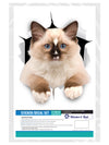 Brown Ragdoll Cat Decals