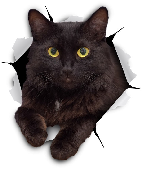 Resting Black Cat Decals