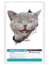 Laughing Grey Cat Decals