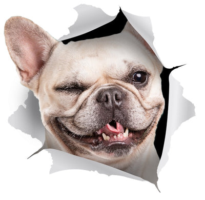 Winking French Bulldog Decals