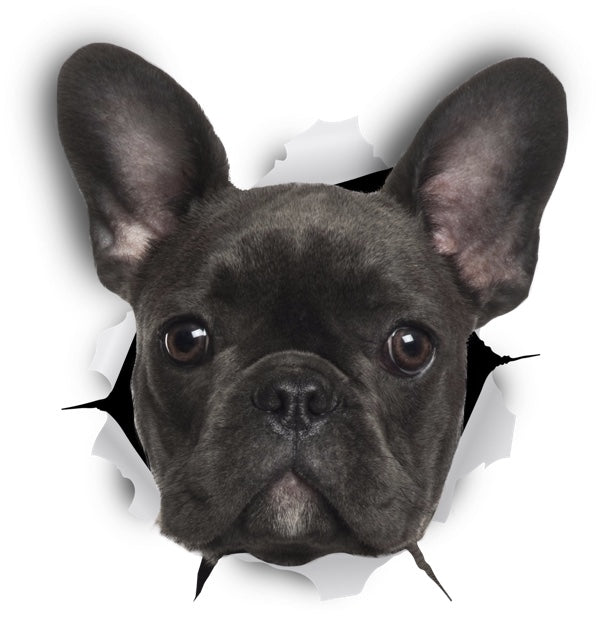Black French Bulldog Decals