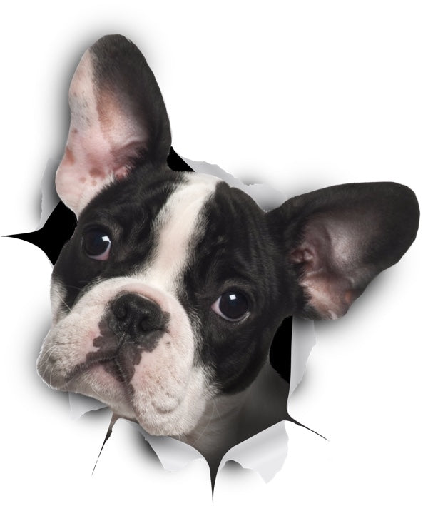 Black & White French Bulldog Decals