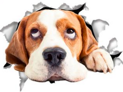 Hopeful Beagle Decals