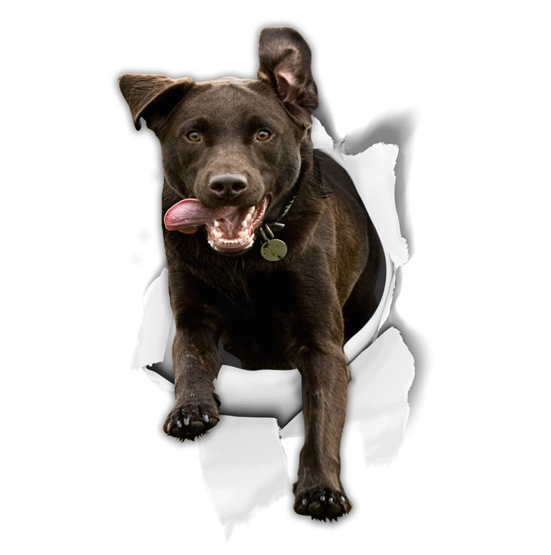Excited Black Labrador Decals