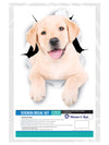 Cute White Labrador Decals