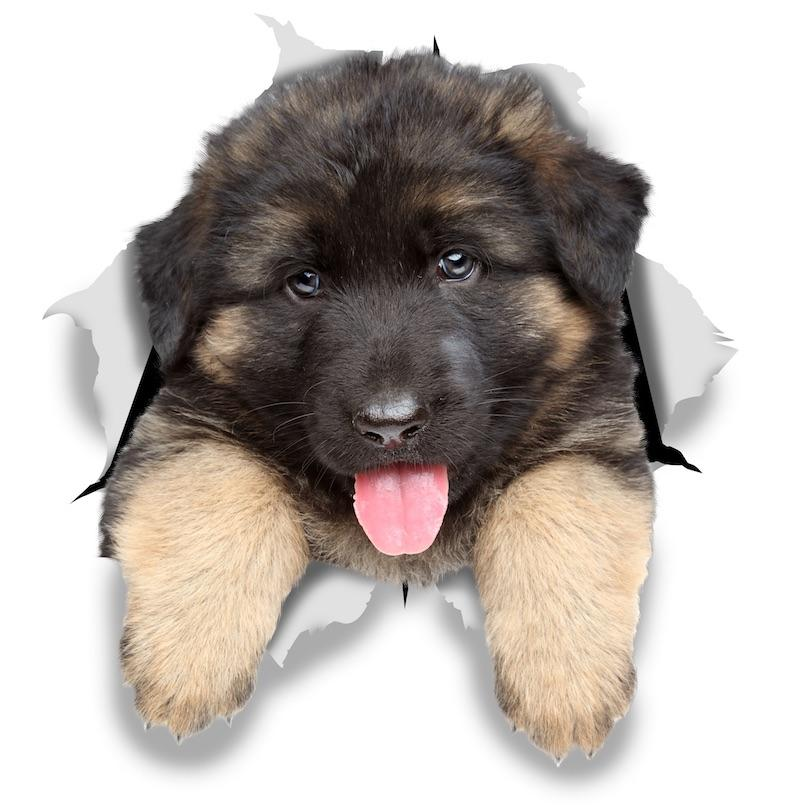 German Shepherd Puppy Decals
