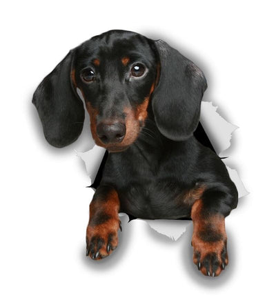 Black Dachshund Decals