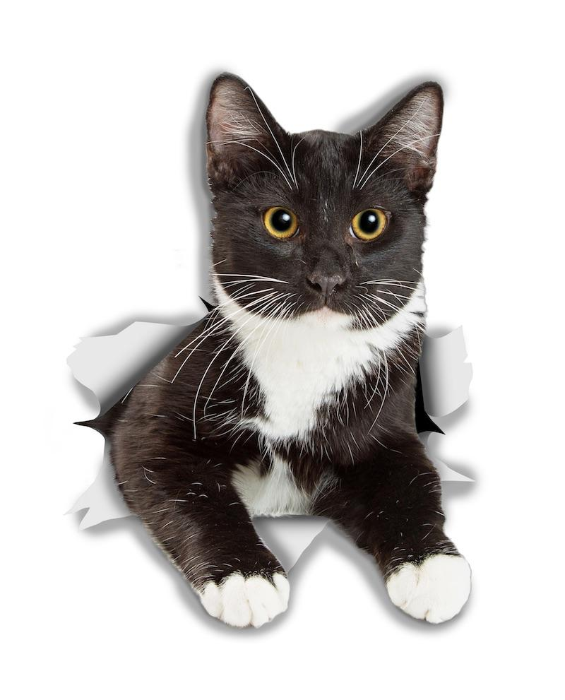 Resting Tuxedo Kitty Decals