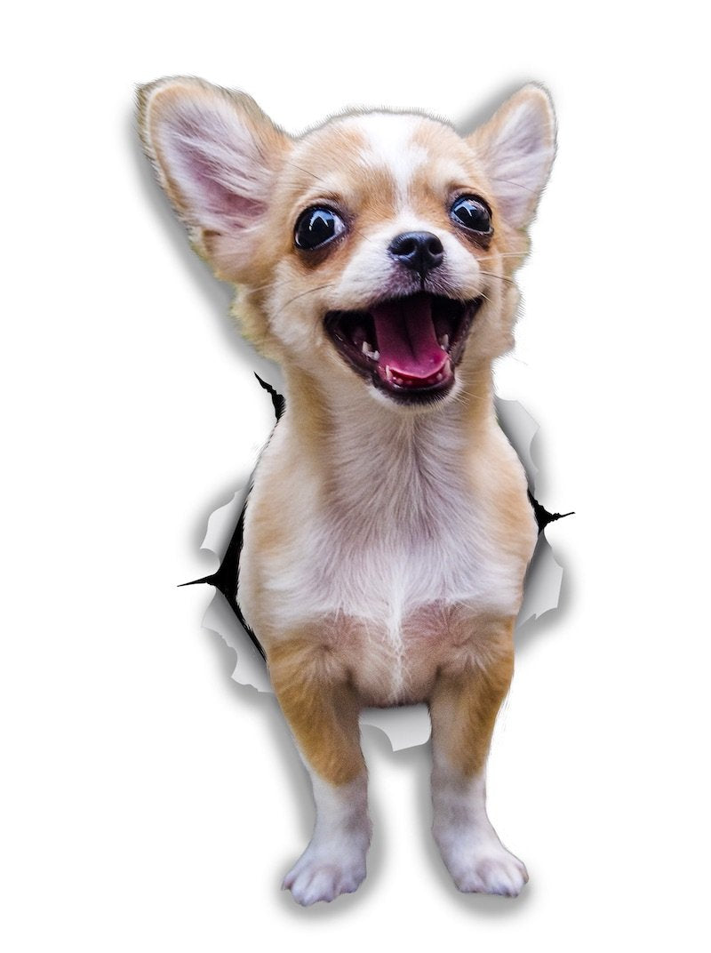 Excited Chihuahua Decals